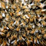 bees-276190_1280